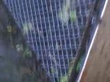 Установка вольера для котиков (вид с окна). Мася, как гарант достоверности :)