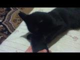 Нашу кошку бесит Реп часть 2